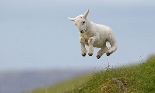 'Animals regulate their activities on an annual cycle, becoming frisky in spring.' Photograph: Richard Peters/Alamy